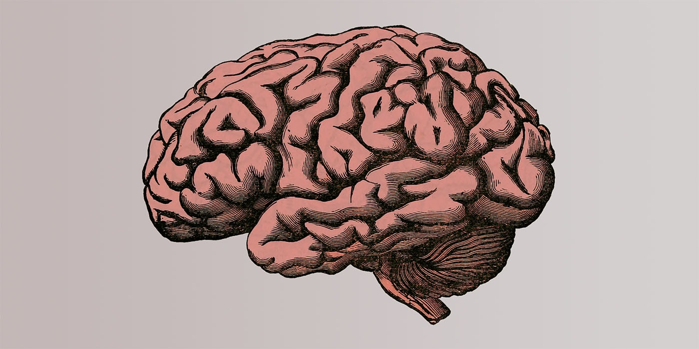 An image of a human brain, used as an illustration for the topic of improving long term memory.